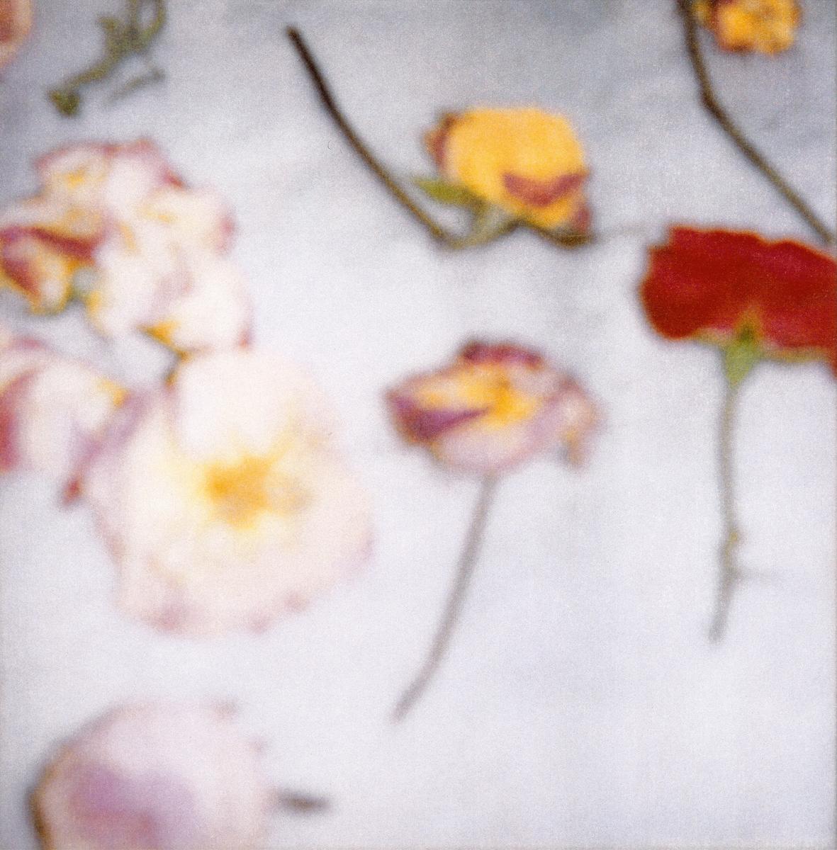 Cy Twombly, »Light Flowers (II)« Gaeta 2008 / © 2016 Fondazione Nicola Del Roscio
