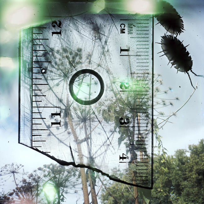 "© Stephen Gill, aus der Serie ""Talking to Ants"" 2013 gerahmt, 125 x 1229 cm, Archival pigment print / Courtesy Christophe Guye Galerie, Zürich (CH)"