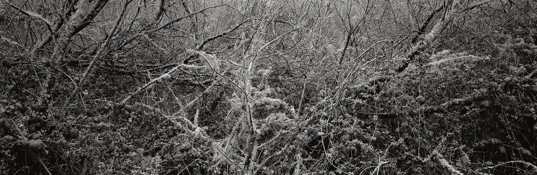 © Christian Vogt, Naturraum # 17