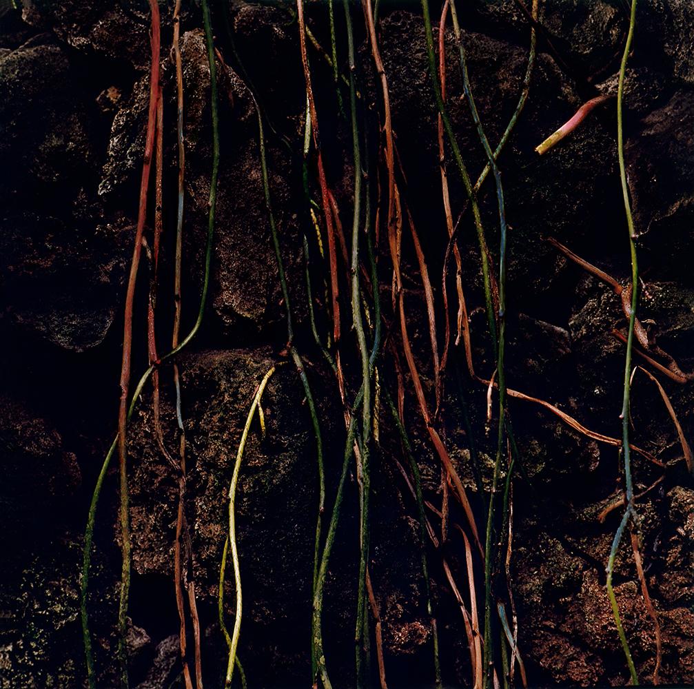 "© Alexander Gehring ""Wurzeln"", aus: 'Alchemy of Colour', 2018"