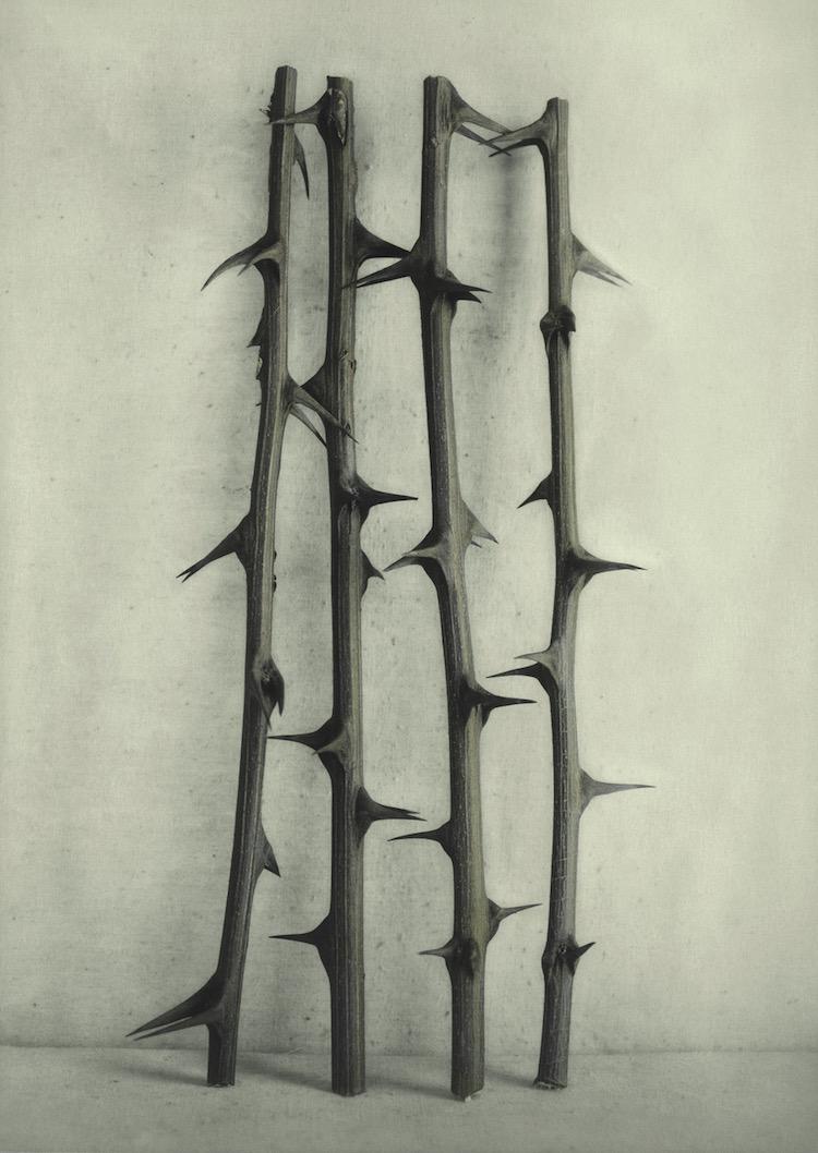 "© Ingar Krauss, ""Robinienzweige"" / Courtesy Sandau & Leo Galerie, Berlin"