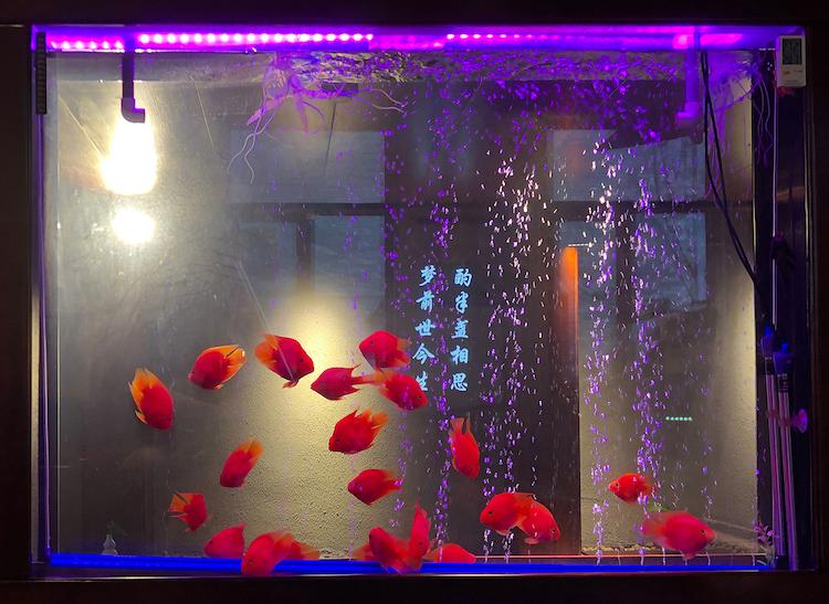 © Anna Lehmann-Brauns, Beijing Series, Goldfische