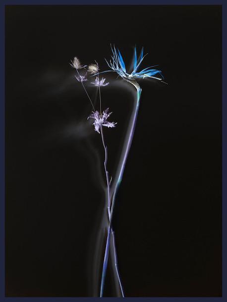 © Axel Hütte, Flower_4676, 2020, Ditone Print framed 205 x 155 cm, Ed.of4 / Courtesy Daniel Marzona